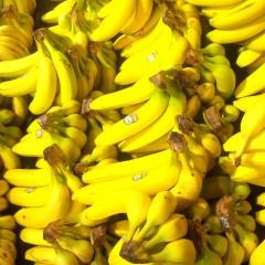 Fabuleuses bananes!